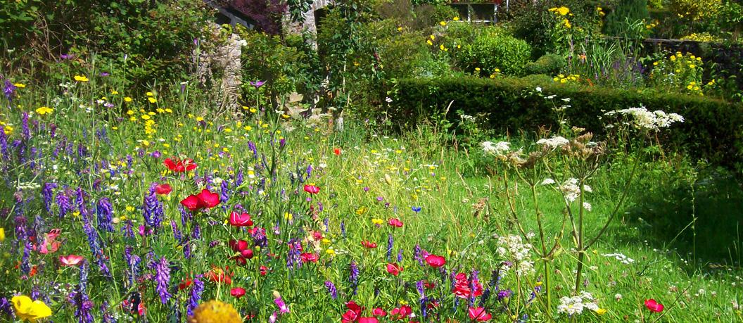 Wildflower-meadow-Dartington-Farmhouse-Copy